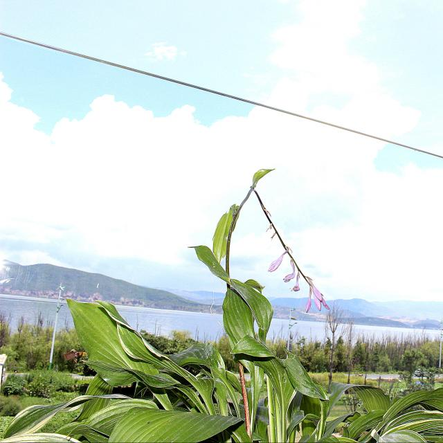 大理花海舍海景客栈 flower seagarden
